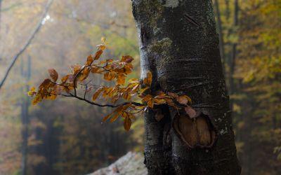 Dans le bois des  hêtres